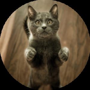 Kočky: