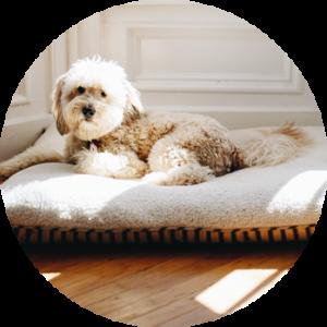 Pelechy a autosedačky pro psy: